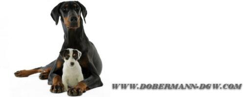 dobermann-dgw